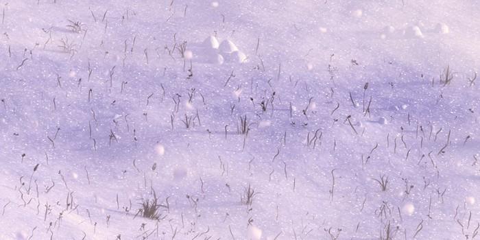 Detail snehu s odleskami a častice suchej trávy